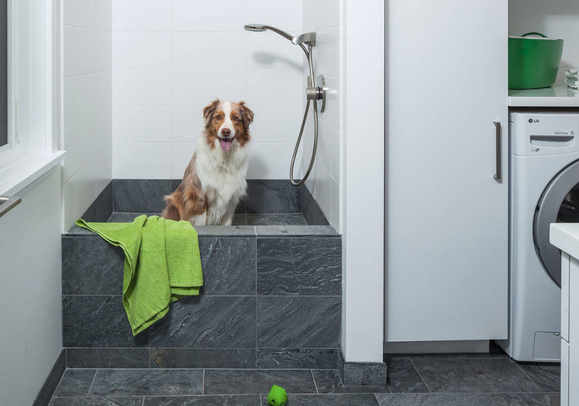Does your dog deserve its own shower?